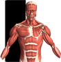 Visual Anatomy is an interactive reference, and education tool for medical workers, students and even for anyone who does not have any medical background knowledge. It is one of the most popular anatomy apps in all major appstores!