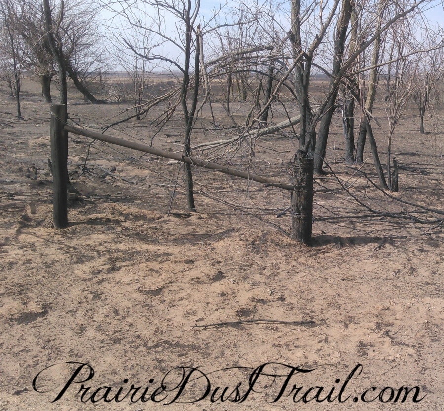 I walked the fences today. We have enough materials that didn't get burnt to replace the fencing that did. YAY! I even saw grass trying to grow through the ash. I have to say I'm not sad about the sage brush...