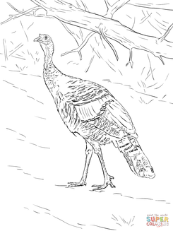 Turkeys coloring pages at SuperColoring.com